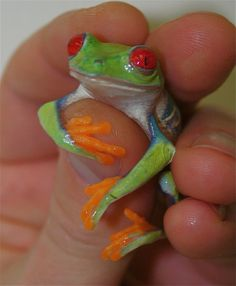 Frog - Tree - Red-Eyed International Symbols, Frog And Toad, Red Eyes, Amphibians, Frogs, Peace, Animals, Women, Animales