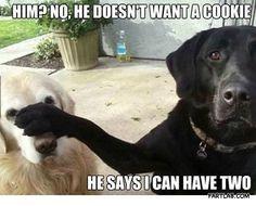 Selfish dog