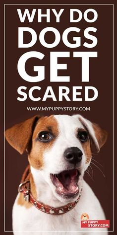 Dog Fears And Phobia And How To Overcome Them - Why Do Dogs Get Scared? Fear in dogs is caused by a number of reasons. The fear or phobia your dog is experiencing could be caused by one, or a combination of the following: mypuppystory.com