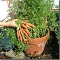 Great idea... growing veggies in flower pots!