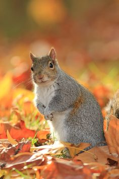 The look Squirrel Husband gave me from around the corner this morning.