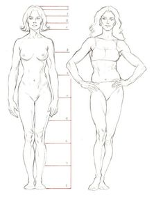 77 Best Anatomy - Female images in 2019   Anatomy reference, Anatomy