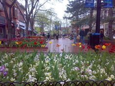 Pearl St. in Boulder, Colorado. I wish I were there now.