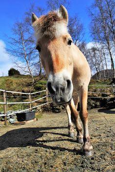 Nysgjerrige Feline i luftegården. Bergen, Eid, Mountains