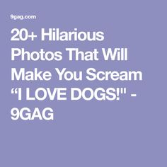 "20+ Hilarious Photos That Will Make You Scream ""I LOVE DOGS!"" - 9GAG"