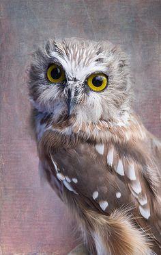 Title  Northern Saw-whet Owl   Artist  Angie Vogel   Medium  Photograph - Photography / Digital Art