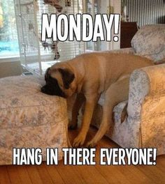 Searching of monday memes collections? Here we have funny Monday memes to descried feelings that week is ends very fast but on Monday, that day is very long and hectic. Funny Monday Memes, Happy Monday Quotes, Monday Humor Quotes, Funny Dog Memes, Funny Dogs, Funny Quotes, Quotes Friday, Friday Memes, Funny Friday