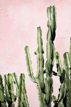 Cactus and succulents Plants Are Friends, Photo Vintage, Cacti And Succulents, Cactus Planters, Cactus Art, Cacti Garden, Succulent Arrangements, Succulent Terrarium, Hanging Planters