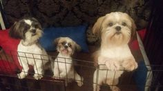 Please let us out!
