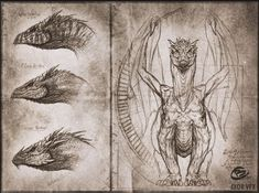 Homebrewing spirits ArtStation - Draconic old manuscripts, Charidimos Bitsakakis Mythological Creatures, Fantasy Creatures, Mythical Creatures, Fantasy Dragon, Fantasy Art, Dragon Anatomy, Dragon Artwork, Dragon Drawings, Dragon Sketch