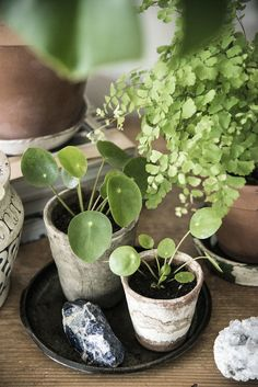 my plant gang