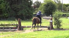 Darcy 15.2 Irish Cob #horseforsale competing at his first hunter trials