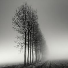 Landscapes Tree Photography by Pierre Pellegrini De la serie: Bruma ITree Photography by Pierre Pellegrini De la serie: Bruma I Tree Photography, Amazing Photography, Landscape Photography, Photography Composition, Exposure Photography, Digital Photography, Landscape Photos, Depth Of Field Photography, Ansel Adams Photography