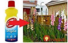 Neuveríte, aké užitočné môže byť savo v záhrade, toto o ňom väčšina ľudí netuší! Gladiolus, Garden Inspiration, Interior Design Living Room, Garden Design, Diy And Crafts, The Originals, Outdoor Decor, Flowers, Plants