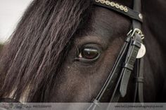 Horse portrait session, My Horse and Me. Black Welsh Section D Pony close up of eye