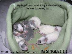 Men or rats Funny Rats, Cute Rats, Cute Funny Animals, Rata Dumbo, Funny Babies, Cute Babies, Dumbo Rat, Cute Little Baby, Animals And Pets