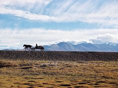 Charrette, près de Tingri, Tibet