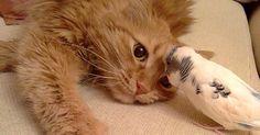同じ屋根の下で暮らし始めた猫とインコ。一瞬で意気投合し、誰もが驚くほどの親友に! (8枚) | エウレカ!eureka! - もふもふ犬猫動画
