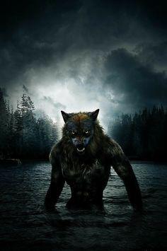 Loup-Garou: The Beast of Harmony Falls (The Ian McDermott Paranormal Investigator series) Fantasy Wolf, Dark Fantasy Art, Fantasy Artwork, Dark Art, Fantasy Creatures, Mythical Creatures, Werewolf Art, Werewolf Legend, Vampires And Werewolves