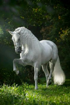 Stunning horse photography. White horse in lush grass at edge of woods.