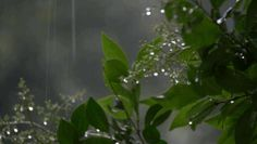 """chewdollars: """" neonghouls: """" Here is compilation of rainy day's for @chewdollars """" Looking at this while listening to RainyMood is so very calming """""""