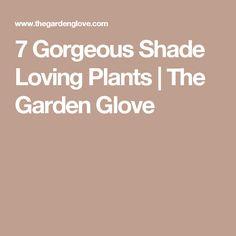 7 Gorgeous Shade Loving Plants | The Garden Glove