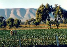 Farm Workers in California | farmers1.jpg