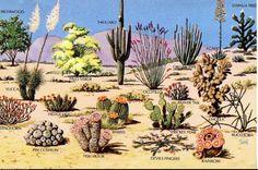 16 Best Plants Of The Desert Images Cacti Succulents Desert