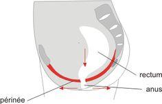 Incontinence Féminine : L'exercice de Kégel  La grossesse bouleversant pendant quelques mois la totalité du système urinaire de celle ci. Pour lire la suite cliquez sur le lien ci après! http://www.handicapincontinence.fr/blog/incontinence-feminine-lexercice-de-kegel/
