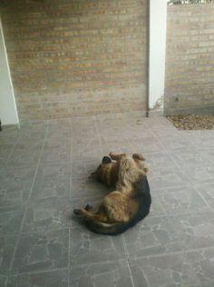 Gurí's sleeping poses