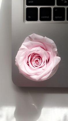 Preserved Rose Rose Art Studio Art