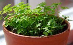 Put your green thumb to work growing a first-aid kit that will keep you healthy all year.