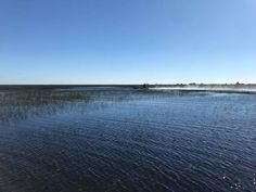 This could be your day... come discover the Everglades!  VISIT FLORIDA  Visit Lauderdale
