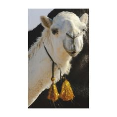 >>>Cheap Price Guarantee          A llama canvas print           A llama canvas print today price drop and special promotion. Get The best buyDiscount Deals          A llama canvas print Review on the This website by click the button below...Cleck Hot Deals >>> http://www.zazzle.com/a_llama_canvas_print-192759379237504611?rf=238627982471231924&zbar=1&tc=terrest