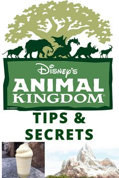 When Tara Met Blog: Tips & Secrets to Visit Pandora at Disney's Animal Kingdom