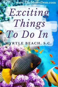 3 Exciting Things to Do In Myrtle Beach, South Carolina with Kids South Carolina Vacation, Myrtle Beach South Carolina, Myrtle Beach Sc, Myrtle Beach Spring Break, Myrtle Beach Things To Do, Beach Vacation Meals, Myrtle Beach Vacation, Beach Trip, Myrtle Beach Boardwalk