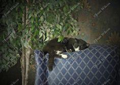 Painted Sleeping Schubert the Kitty Cat Kitten Catnap Fine Art Photography Photo Print - pinned by pin4etsy.com