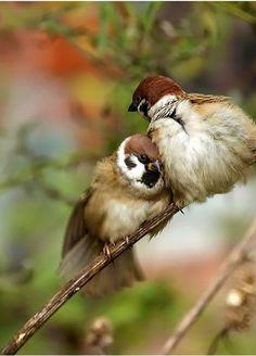 Birdie Snuggles