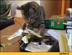 Cat Is Cat Funny Gif #38010 - Funny Cat Gifs|Funny Gifs|Cat Gifs