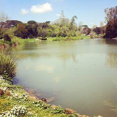 Laghetto di Villa Pamphili e una tartaruga all\'improvviso - #roma #park #italianplace #villapamphili #rome #picnic #lake #turtle #villeromane