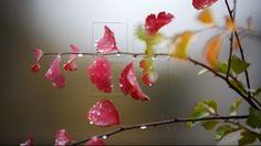De ce frunzele au culori diferite și ce face ca nuanța lor să se modifice