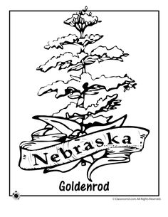 State Flower Coloring Pages Colorado State Flower Coloring Page