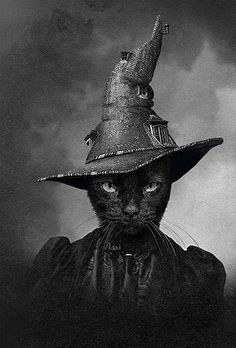 Black Cat Witch - The Cat in the Magical Hat. Fröhliches Halloween, Vintage Halloween, Halloween Black Cat, Crazy Cat Lady, Crazy Cats, Animal Gato, Witch Cat, Vintage Witch, Here Kitty Kitty