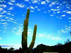 Tucson by April Gollihue
