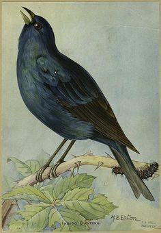 Vintage Bird Postcards ~ Miscellaneous Seasons Crow