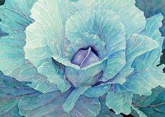 cabbage watercolor painting  5 x 7 print of watercolor painting... Carol Sapp, via Etsy.