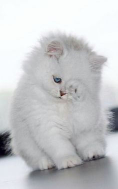 Cute cats and dogs videos cute kittens hissing Kittens And Puppies, Cute Cats And Kittens, Baby Cats, Newborn Kittens, Adorable Kittens, Adorable Puppies, Cutest Kittens Ever, Pretty Cats, Beautiful Cats
