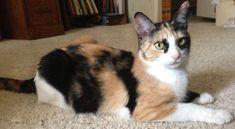 Callie, Grumpy Cats Mother