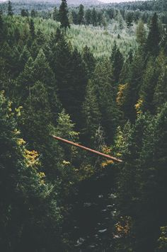 Dare #forest #bridge