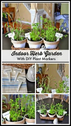 A diy indoor herb ga